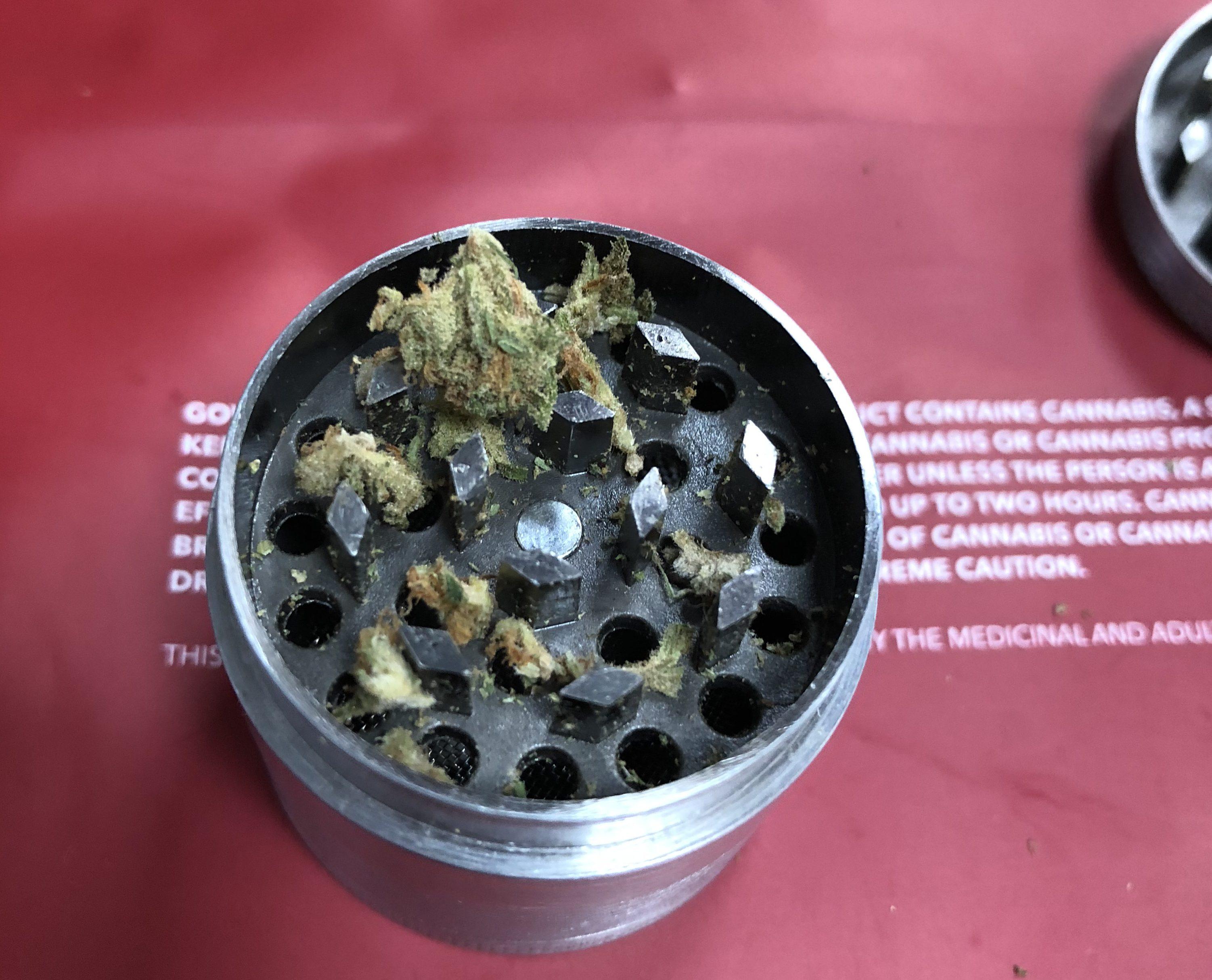 大麻ツアーに行ってきた感想